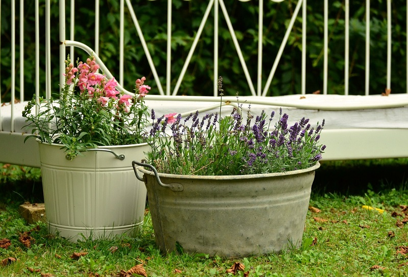 Toxins in Plant Containers